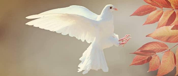 Entscheide dich für Frieden